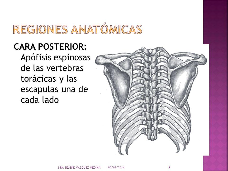 Magnífico Anatomía Apófisis Espinosa Imágenes - Imágenes de Anatomía ...