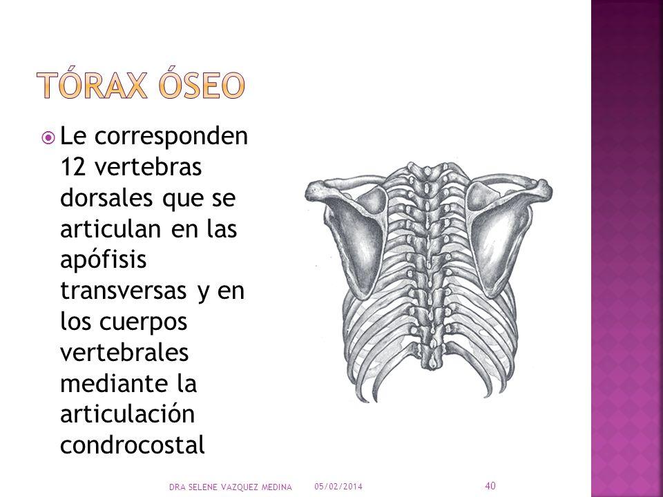 Tórax óseo
