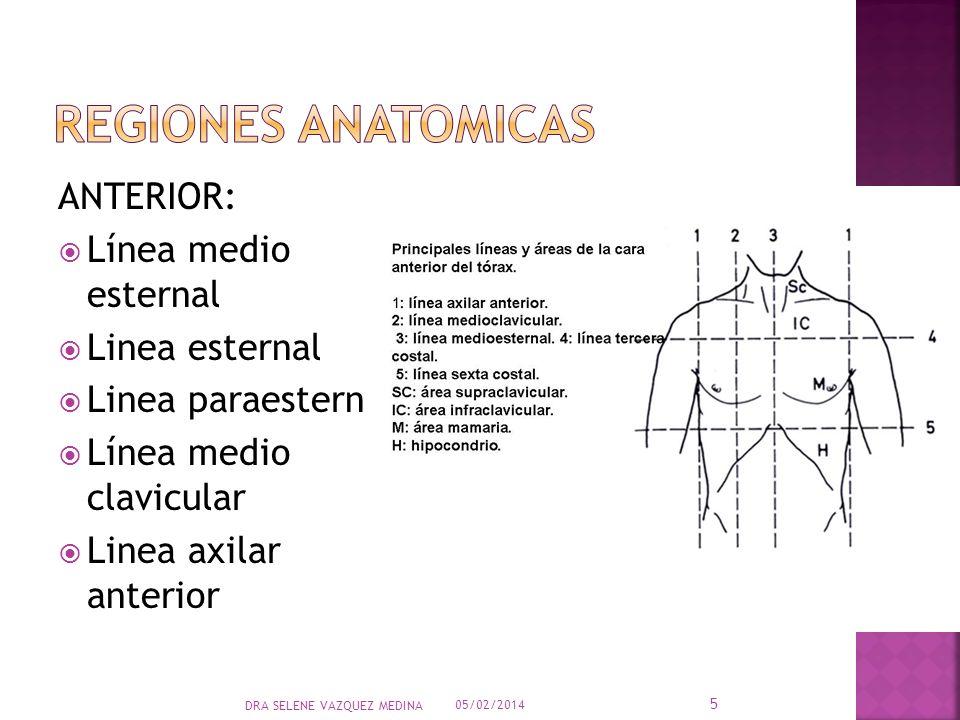REGIONES ANATOMICAS ANTERIOR: Línea medio esternal Linea esternal