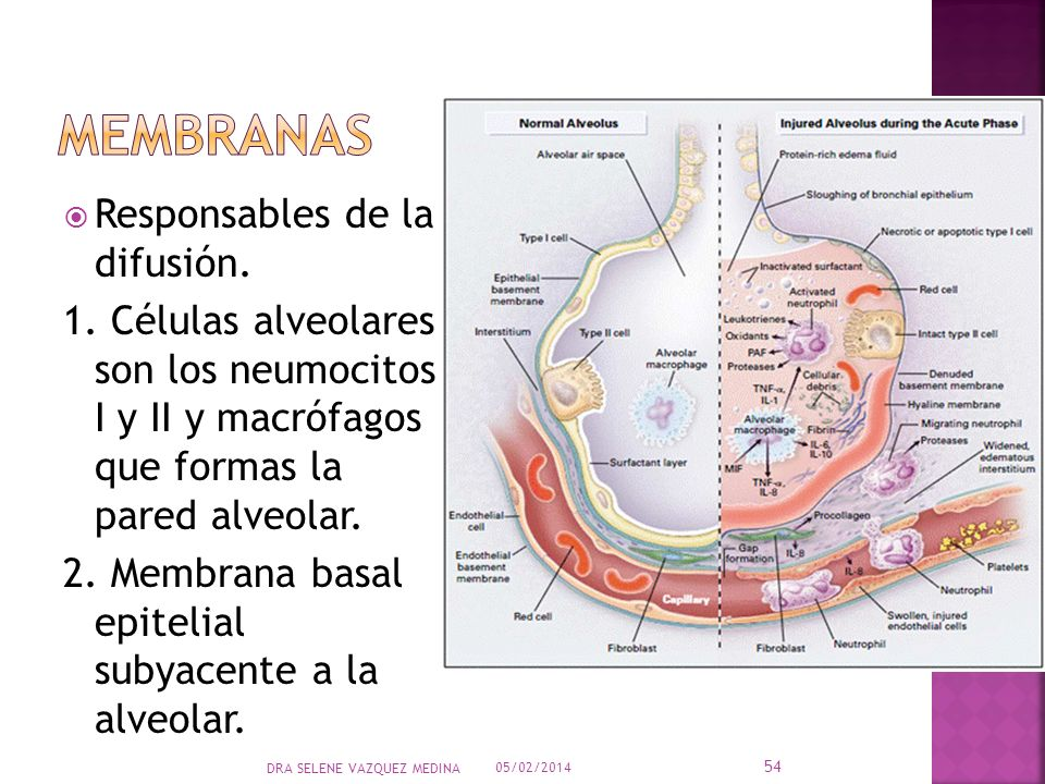 Membranas Responsables de la difusión.