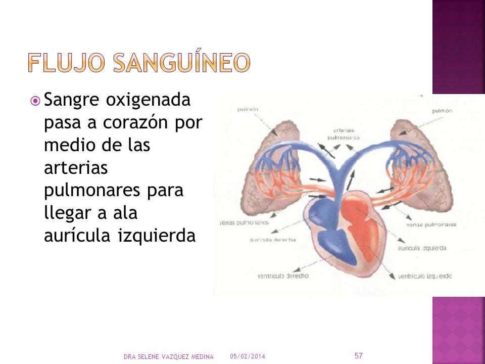 Flujo sanguíneo Sangre oxigenada pasa a corazón por medio de las arterias pulmonares para llegar a ala aurícula izquierda.