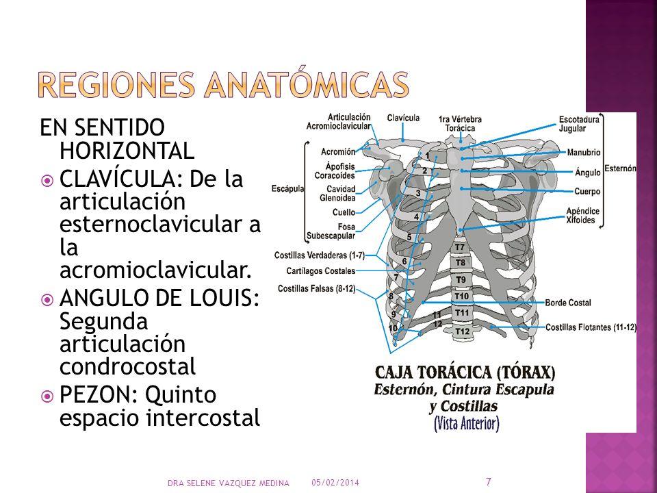 Regiones anatómicas EN SENTIDO HORIZONTAL