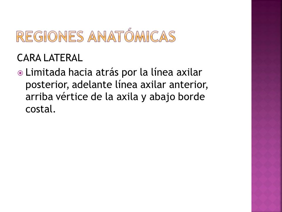 Regiones anatómicas CARA LATERAL