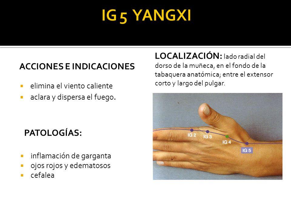 Fantástico Anatomía De Un Pulgar Imagen - Anatomía de Las ...