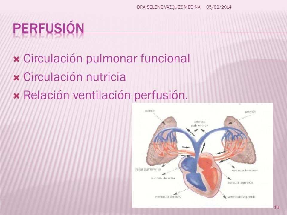perfusión Circulación pulmonar funcional Circulación nutricia