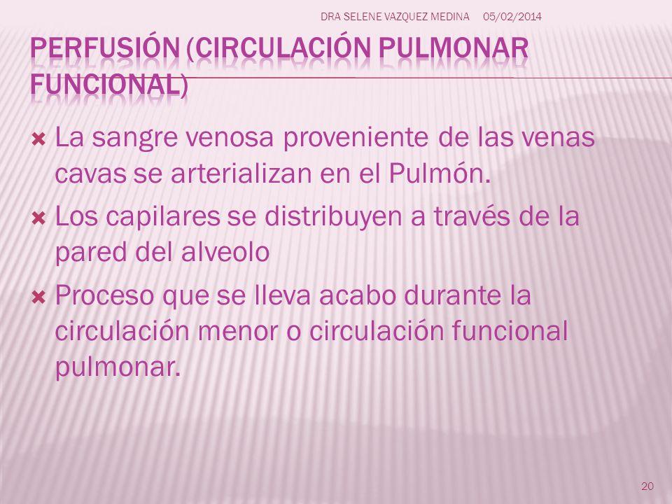 Perfusión (circulación pulmonar funcional)