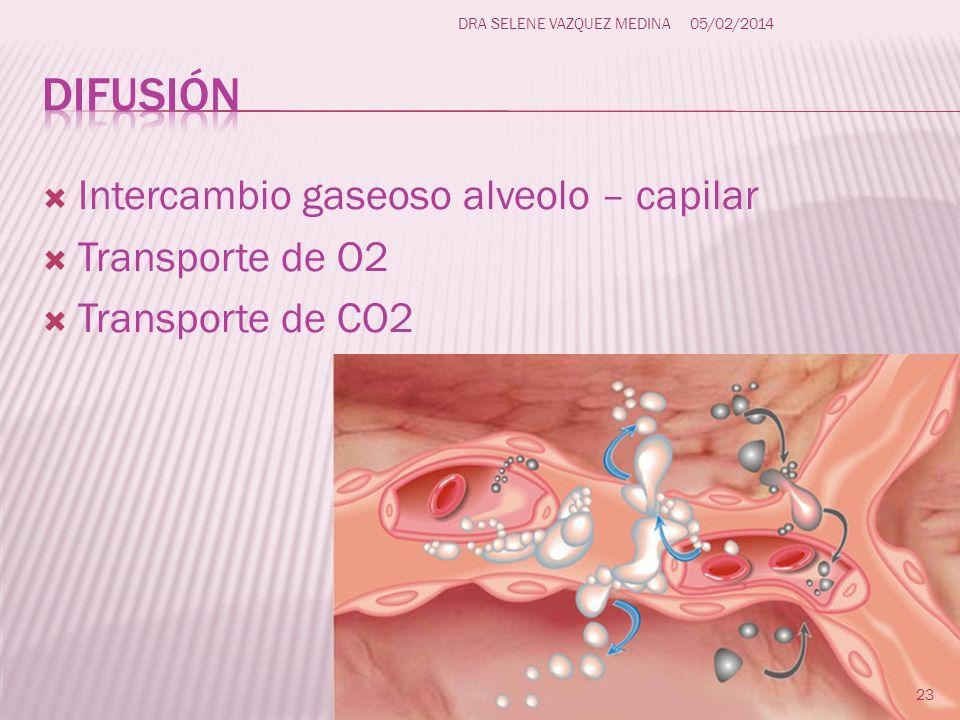 difusión Intercambio gaseoso alveolo – capilar Transporte de O2