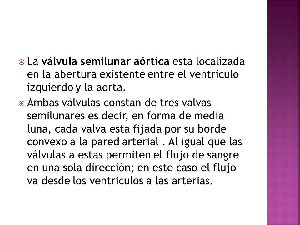 La válvula semilunar aórtica esta localizada en la abertura existente entre el ventriculo izquierdo y la aorta.