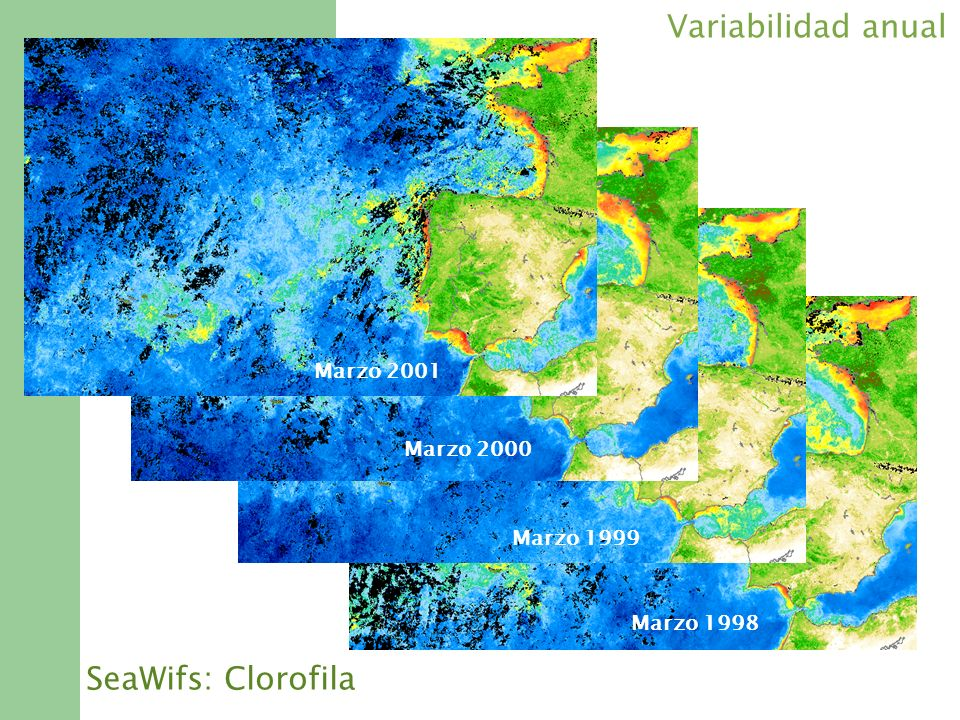Variabilidad anual SeaWifs: Clorofila Marzo 2001 Marzo 2000 Marzo 1999