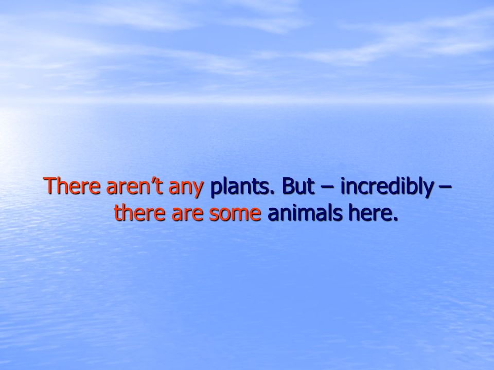There aren't any plants. But – incredibly – there are some animals here.