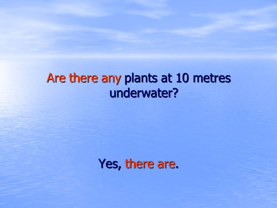 Are there any plants at 10 metres underwater