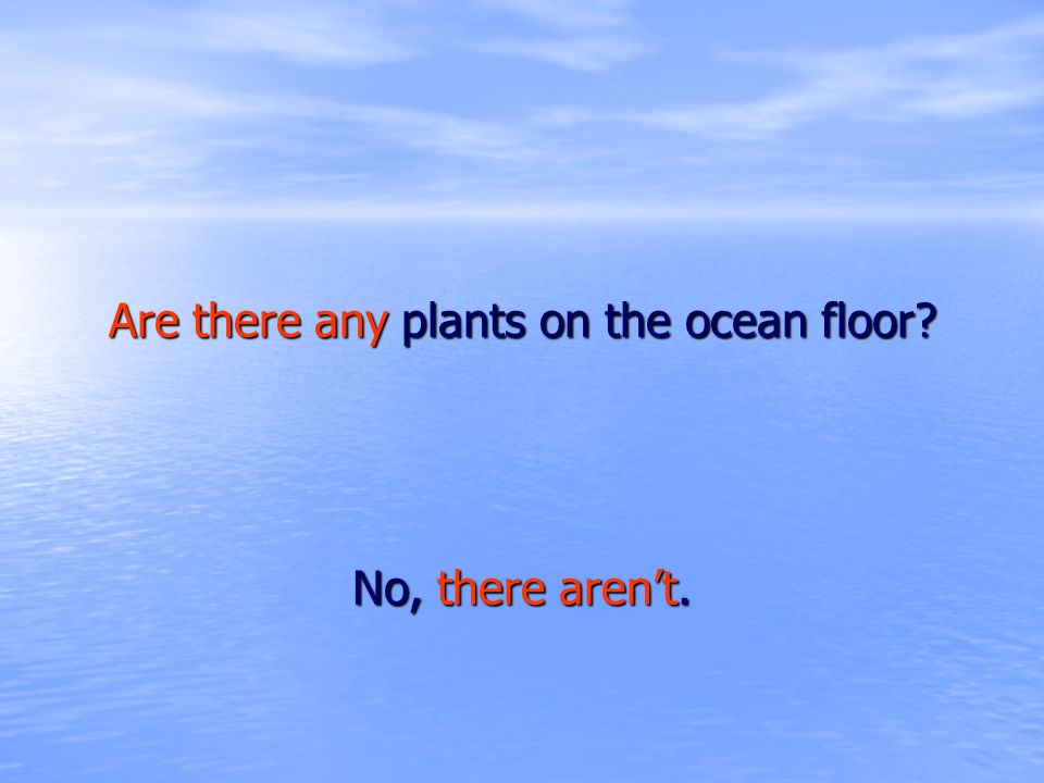 Are there any plants on the ocean floor