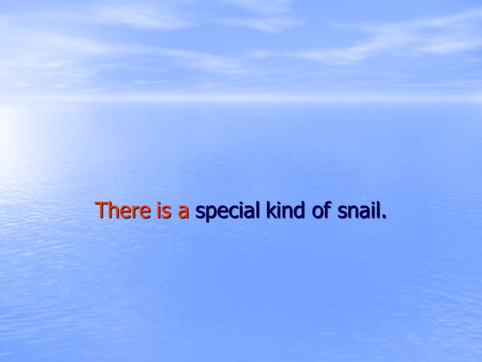 There is a special kind of snail.