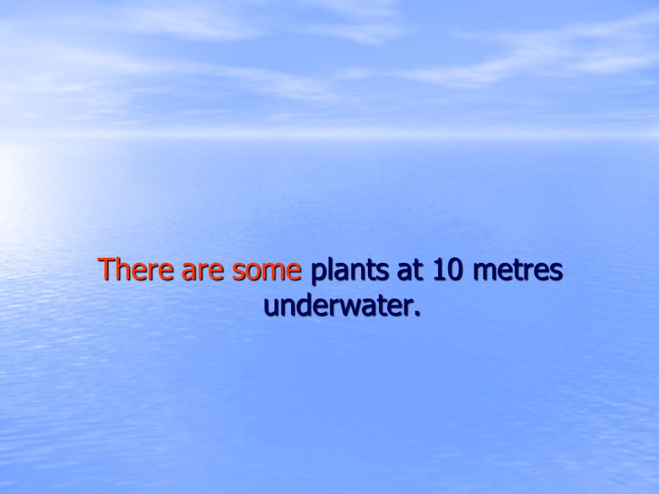 There are some plants at 10 metres underwater.