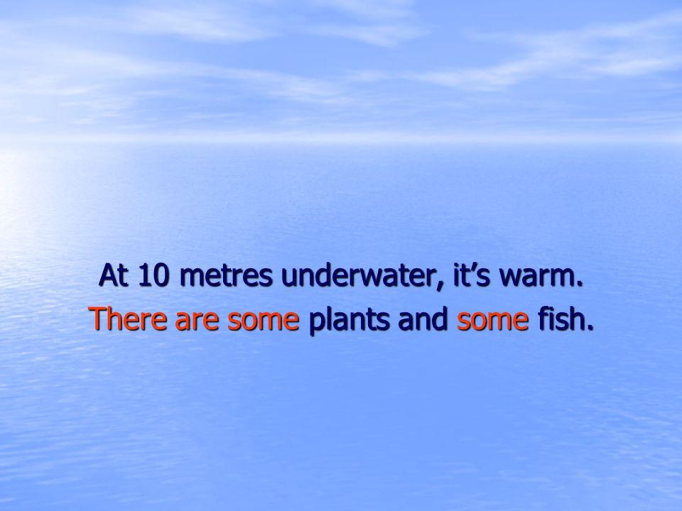 At 10 metres underwater, it's warm.