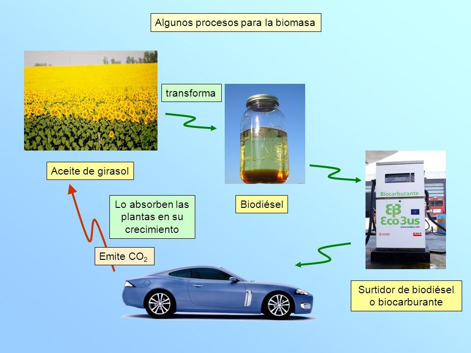 Algunos procesos para la biomasa