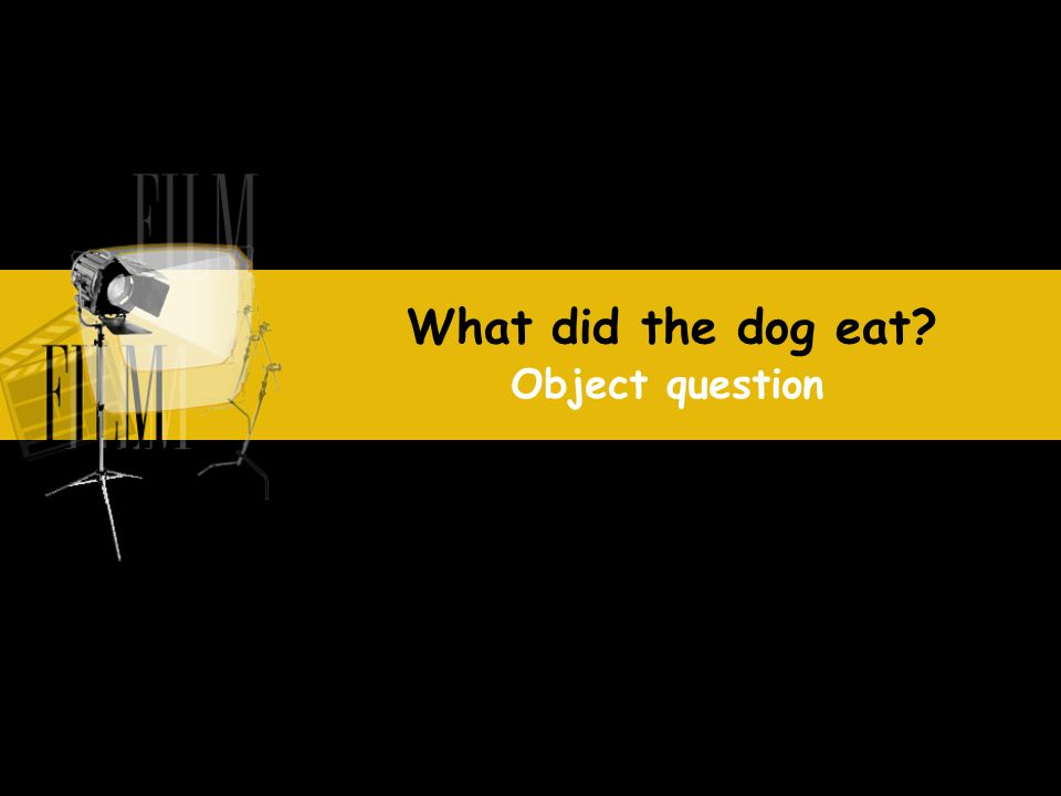 What did the dog eat Object question