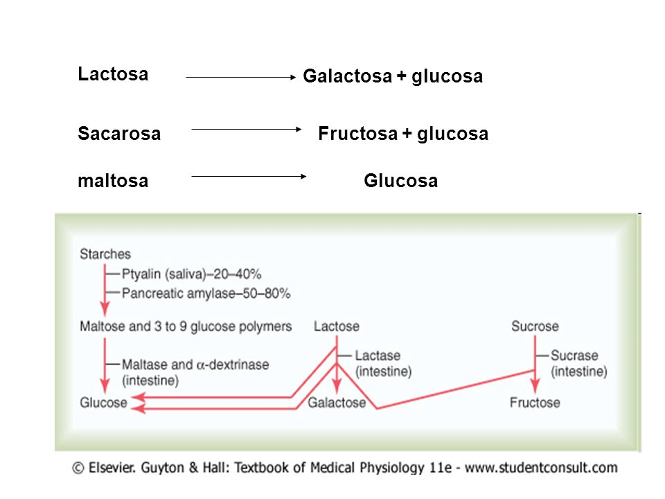 Lactosa Galactosa + glucosa Sacarosa Fructosa + glucosa maltosa Glucosa