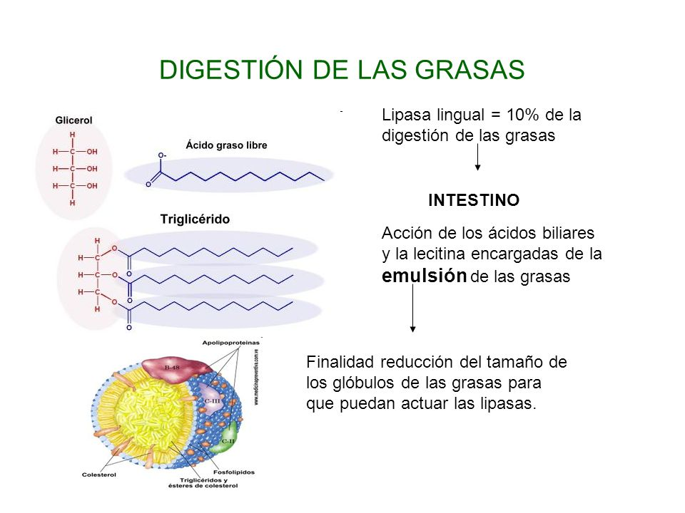 DIGESTIÓN DE LAS GRASAS
