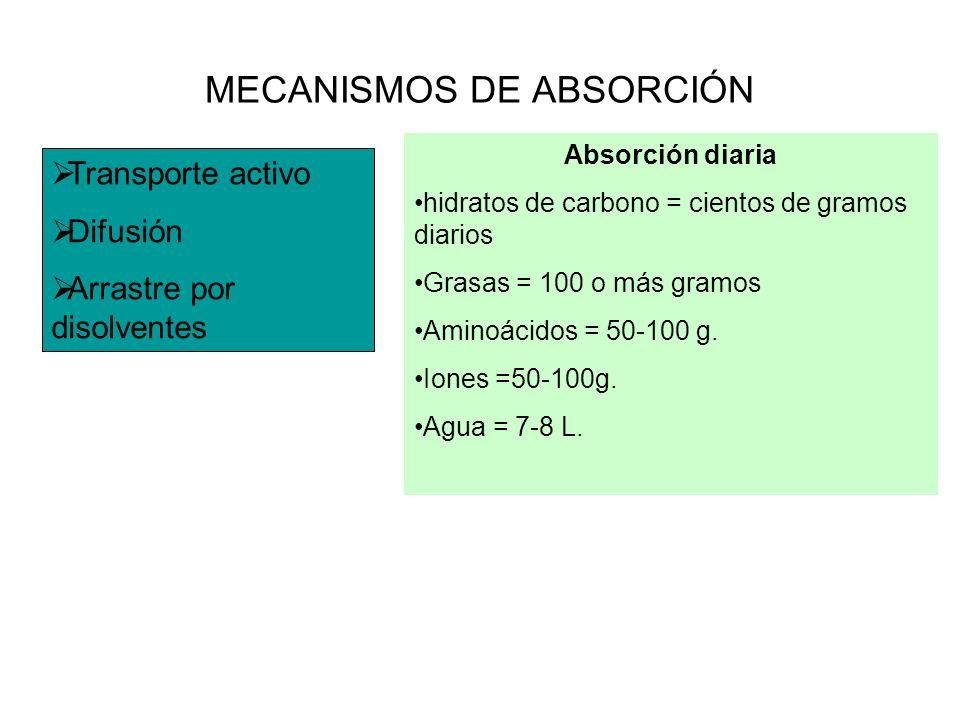 MECANISMOS DE ABSORCIÓN