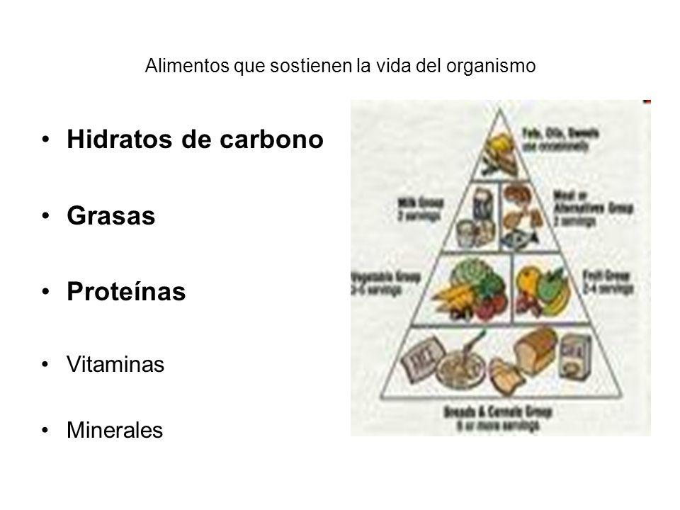 Alimentos que sostienen la vida del organismo