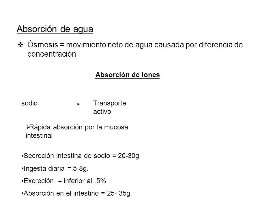Absorción de aguaÓsmosis = movimiento neto de agua causada por diferencia de concentración.