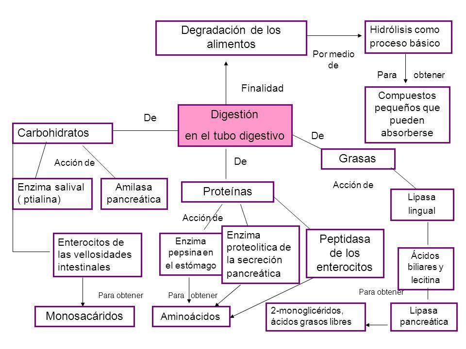 Degradación de los alimentos