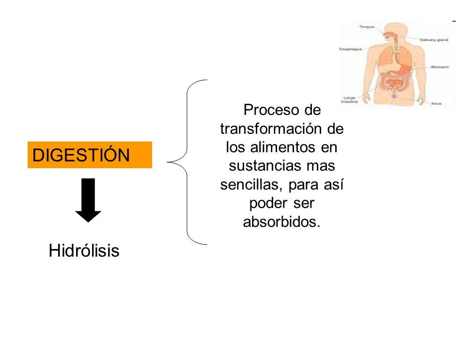 Proceso de transformación de los alimentos en sustancias mas sencillas, para así poder ser absorbidos.