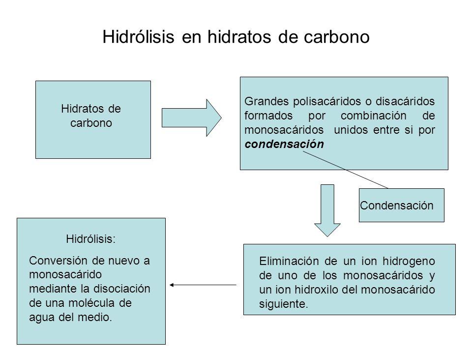Hidrólisis en hidratos de carbono