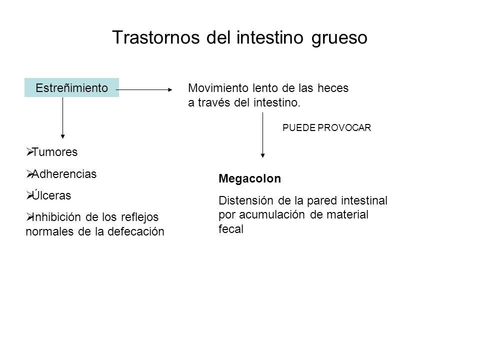 Trastornos del intestino grueso