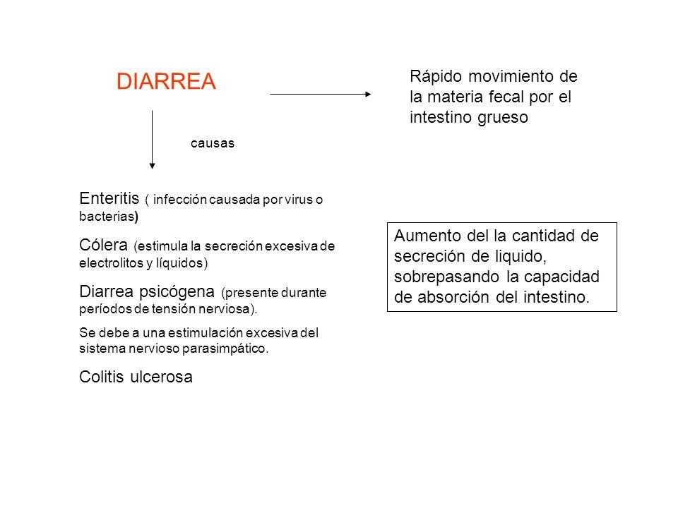DIARREA Rápido movimiento de la materia fecal por el intestino grueso