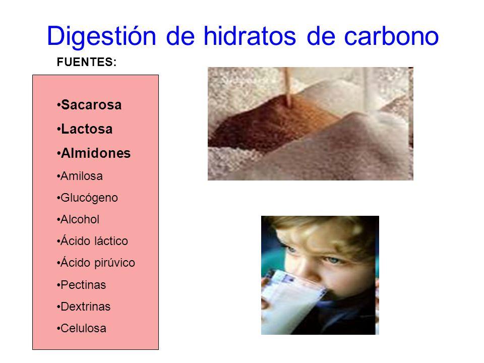 Digestión de hidratos de carbono