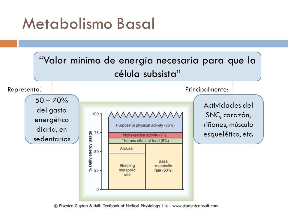 Metabolismo Basal Valor mínimo de energía necesaria para que la célula subsista Representa: Principalmente: