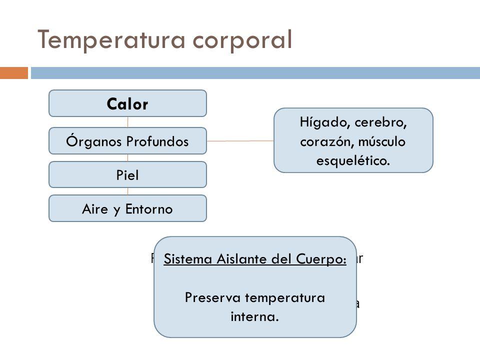 Temperatura corporal Calor