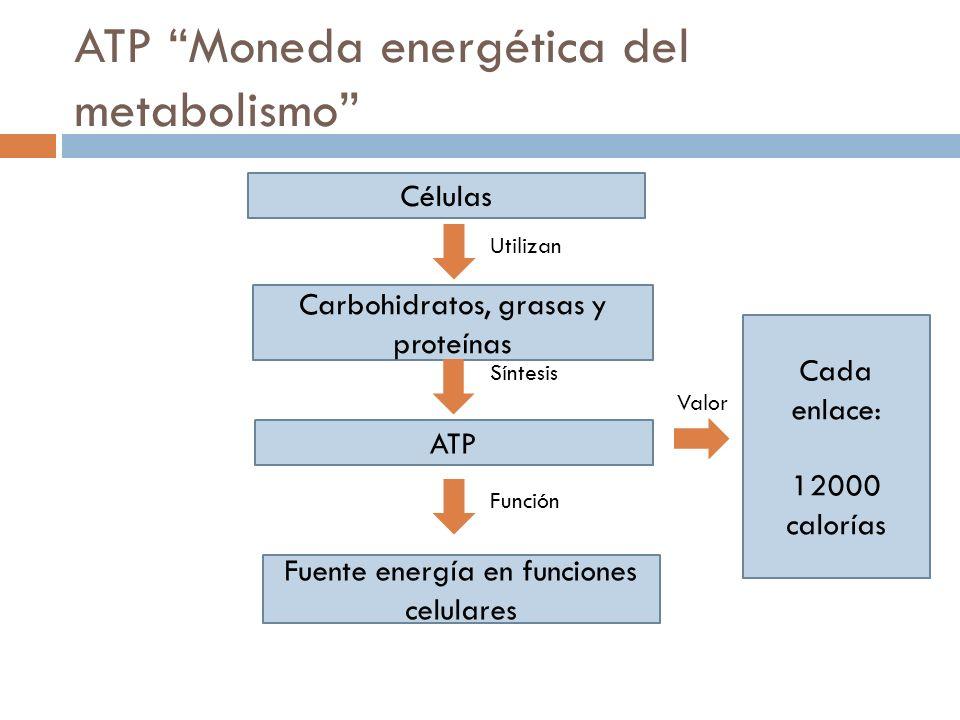 ATP Moneda energética del metabolismo