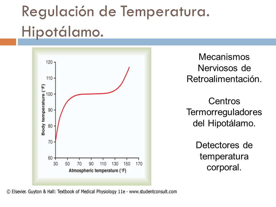 Regulación de Temperatura. Hipotálamo.