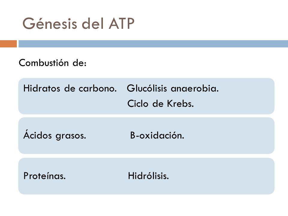 Génesis del ATP Combustión de: Ciclo de Krebs.