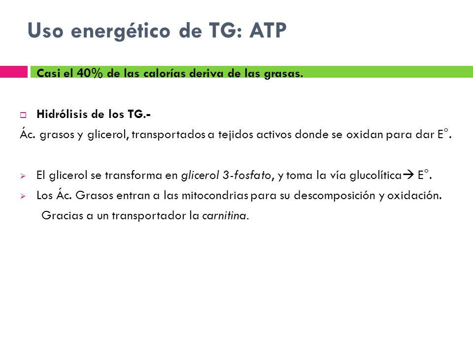 Uso energético de TG: ATP