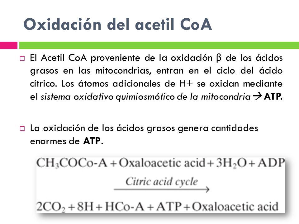 Oxidación del acetil CoA