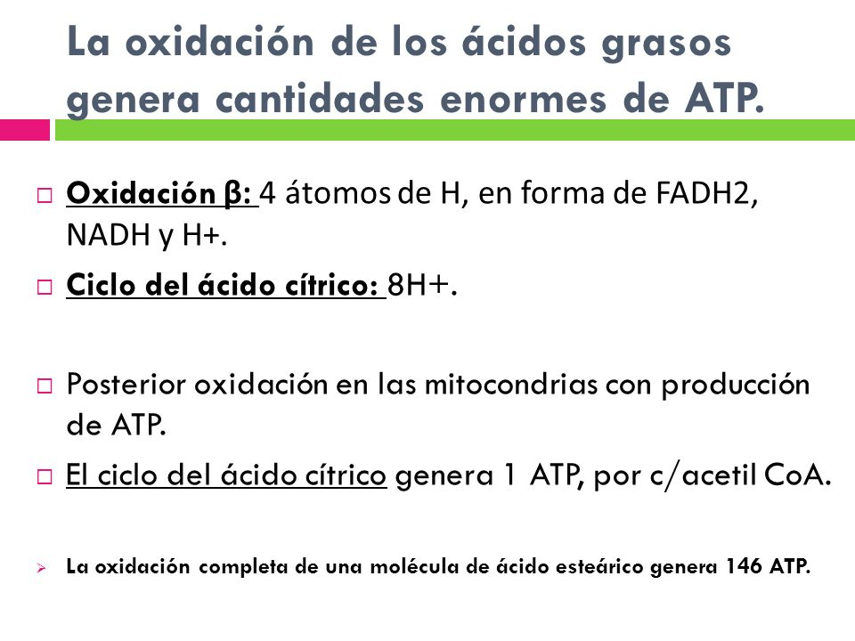 La oxidación de los ácidos grasos genera cantidades enormes de ATP.