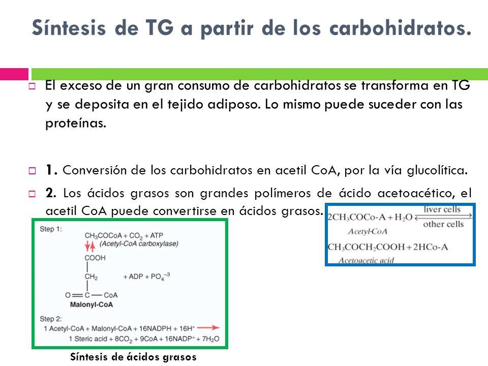 Síntesis de TG a partir de los carbohidratos.
