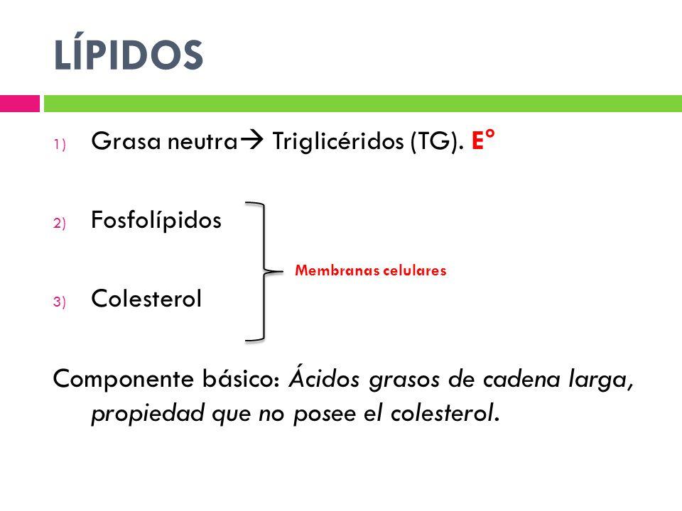 LÍPIDOS Grasa neutra Triglicéridos (TG). E° Fosfolípidos. Colesterol.