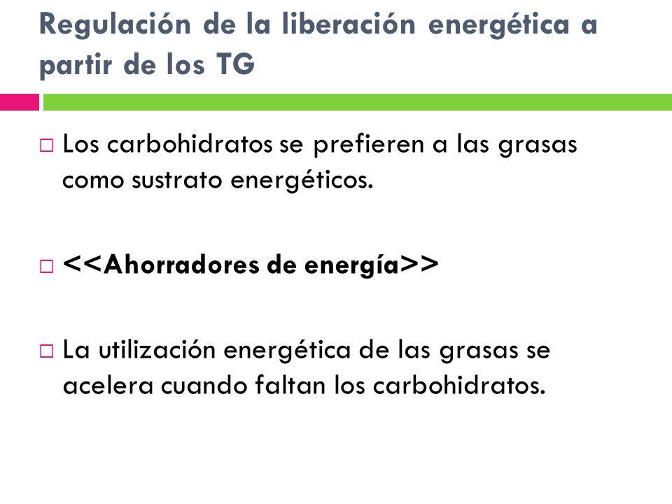 Regulación de la liberación energética a partir de los TG