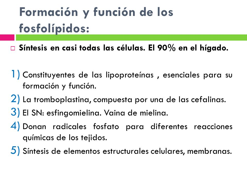 Formación y función de los fosfolípidos: