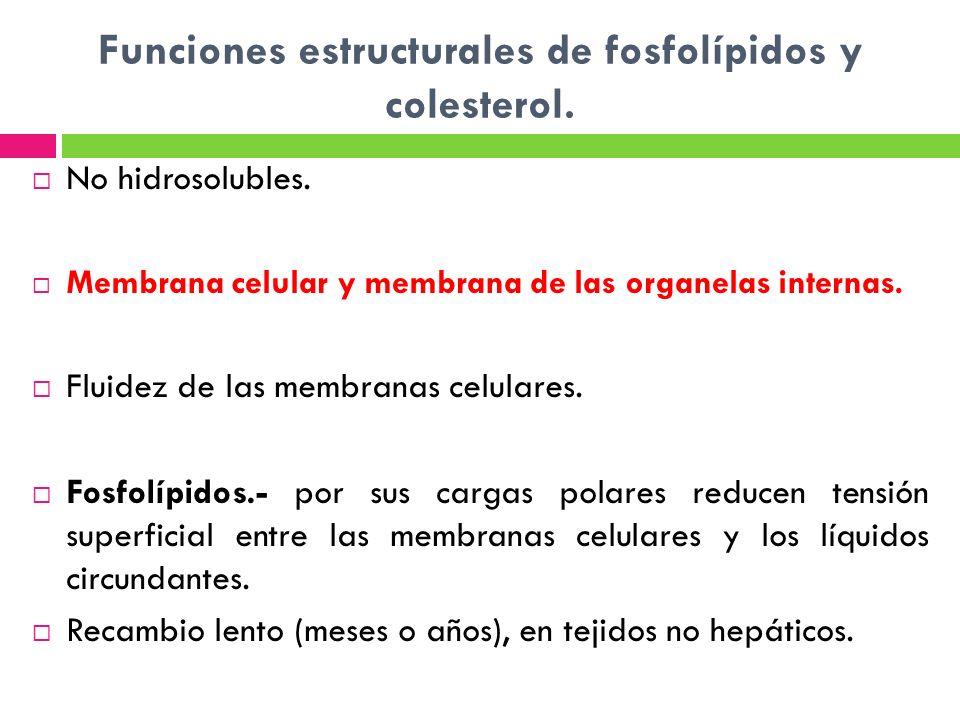 Funciones estructurales de fosfolípidos y colesterol.