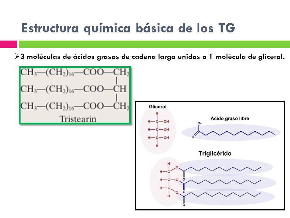 Estructura química básica de los TG