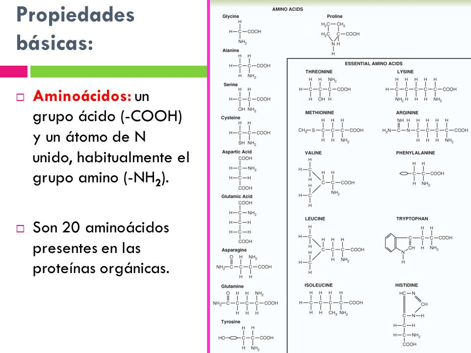 Propiedades básicas: Aminoácidos: un grupo ácido (-COOH) y un átomo de N unido, habitualmente el grupo amino (-NH2).