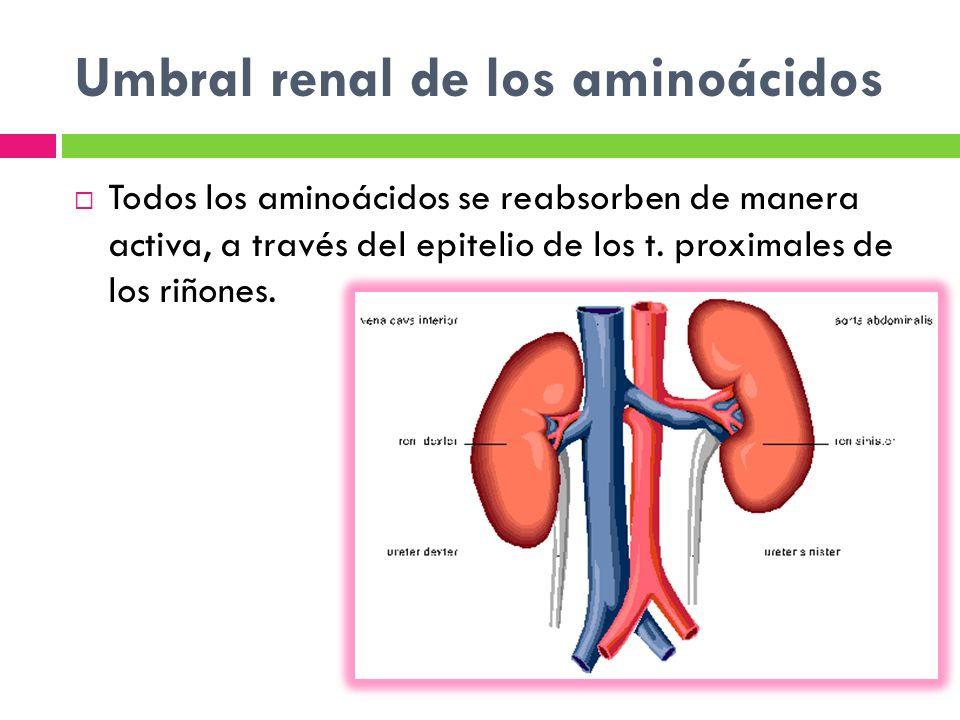 Umbral renal de los aminoácidos
