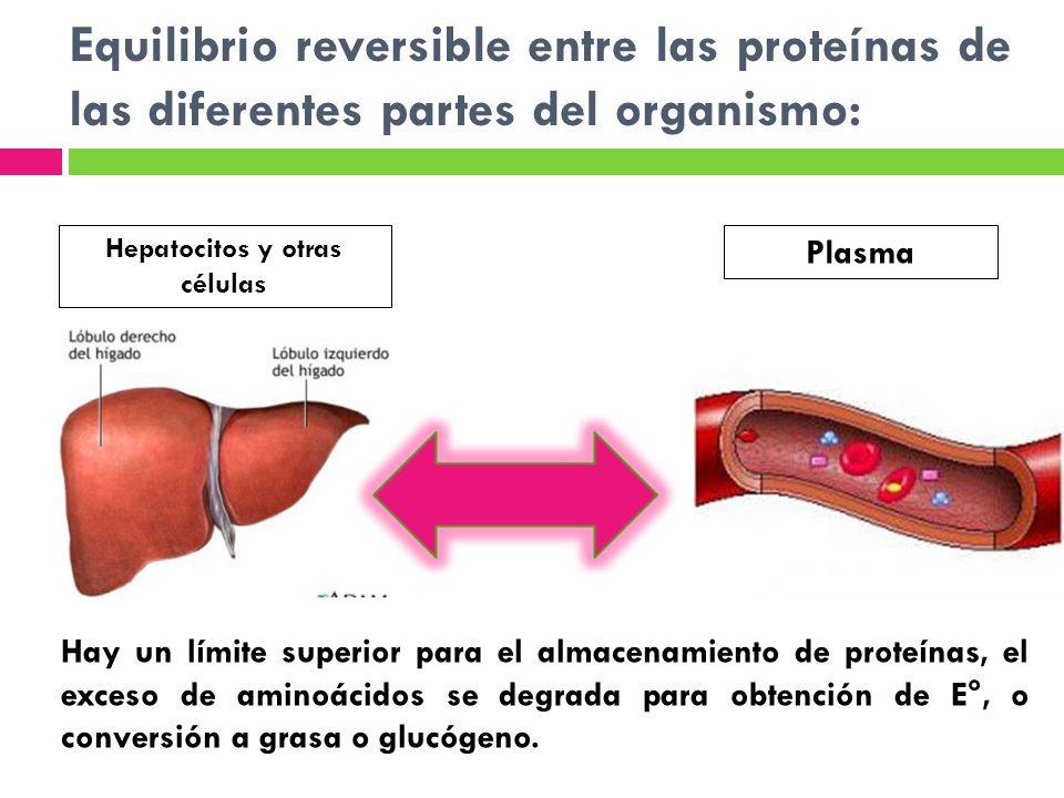 Hepatocitos y otras células