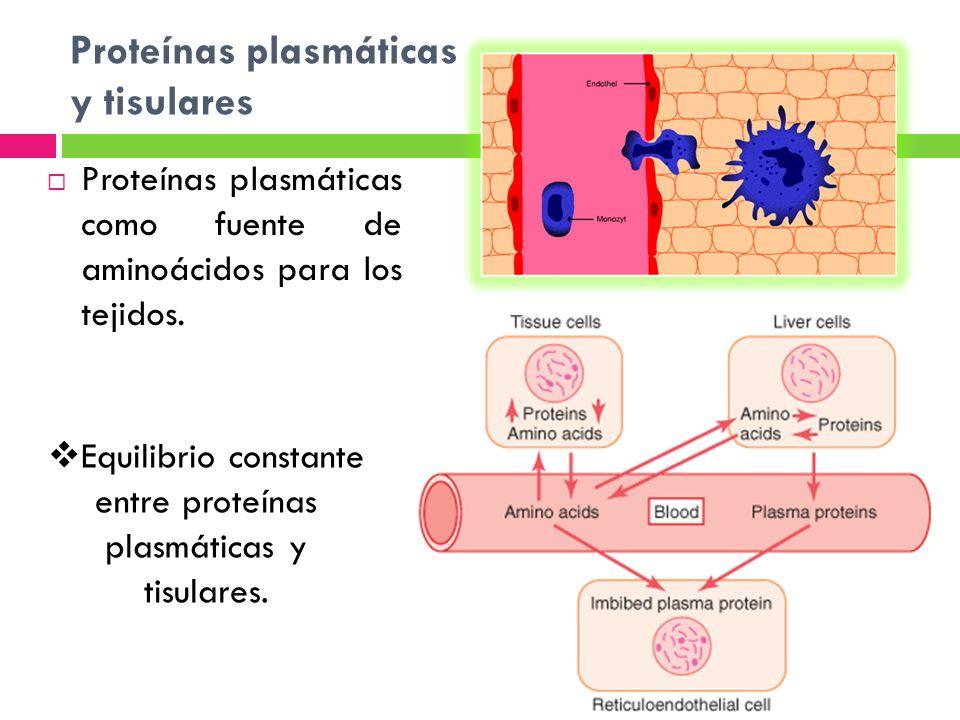 Proteínas plasmáticas y tisulares